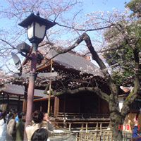 【ミリタリー魂】第13戦 靖国神社 春のさくらフェスティバル