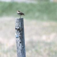 【無所可用】第12話 1羽の鳥を待つこと8時間