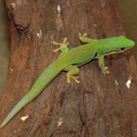 Gecko is fast~ヤモリは速い~