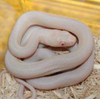 【無所可用】第49回 巳年です。ヘビ飼育はいかが?~ヘビの飼育についてのおはなし~