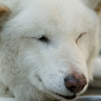 【新作アニメ捜査網】第47回 『八犬伝』映像化の系譜