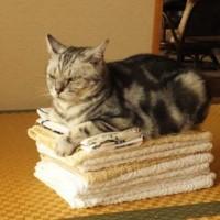 飼い猫の寿命―「外出する猫」より「外出しない猫」の方が約3年…