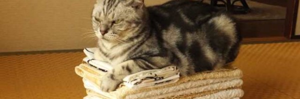 飼い猫の寿命―「外出する猫」より「外出しない猫」の方が約3年も長生きと判明