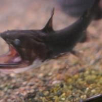 【無所可用】第63回 深海魚は飼えないけれど、これはいかが?…
