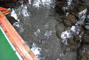 川上神社への橋の上から見た水面