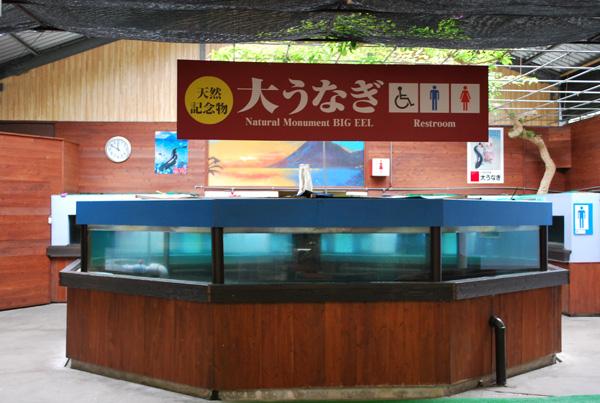 kagoshima0221_6