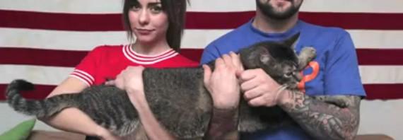 デカ!!!体重9キロ、体長91cmの「デカすぎる猫」