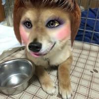 愛犬にバッチリメイクを施してみた結果→誰!?