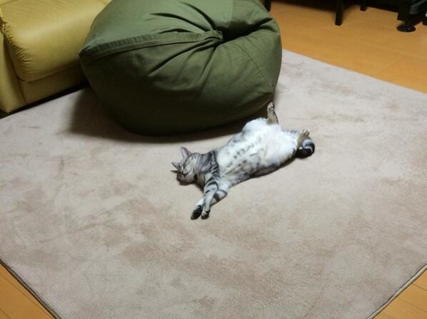 ダメになるソファにたどり着く前にダメになってしまうネコ