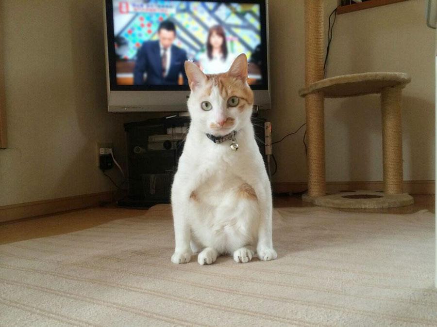 ウッス!可愛いのに気合いの入ったヤンキー座りをしてしまうネコ