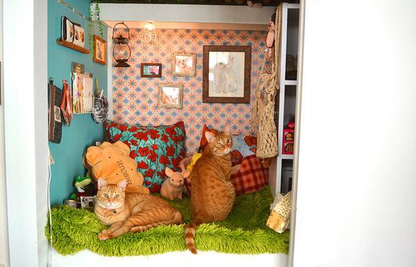 愛する飼いネコのためお部屋を手作りしちゃった 心やさしい飼い主さんとネコ二匹のお話