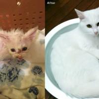 グレムリン状態のボロボロの子猫にタップリの愛情を注いでみた…