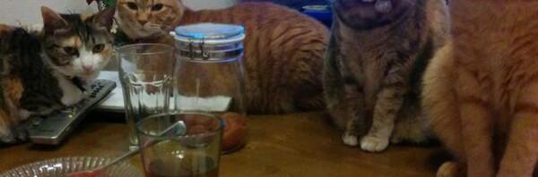 """ゆるふわ漫画『片桐くん家に猫がいる』作者の食卓が 緊張感高すぎて全然""""ゆるふわ""""じゃない件"""