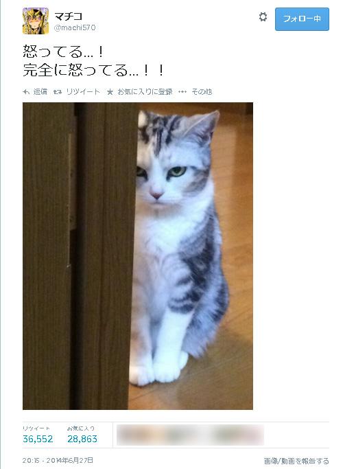 マチコさん(@machi570)家のお猫さん