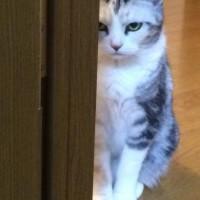 完全に怒ってる猫の写真が話題 横溝正史作品に出ておかしくな…