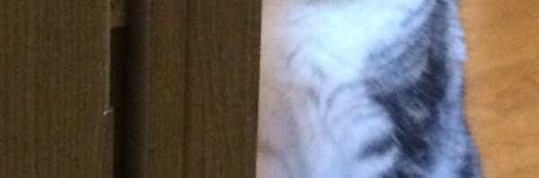 完全に怒ってる猫の写真が話題 横溝正史作品に出ておかしくないレベル