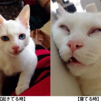 mino_ris