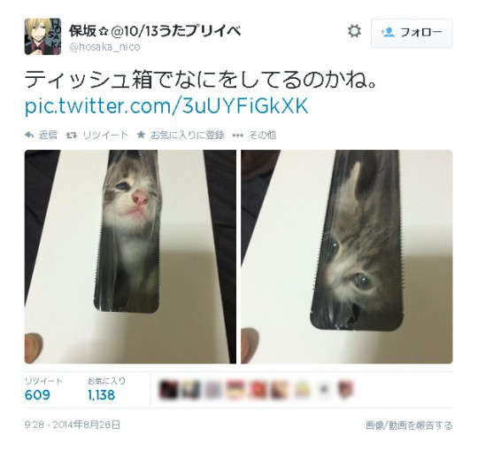 保坂さん(@hosaka_nico)Twitter画面より