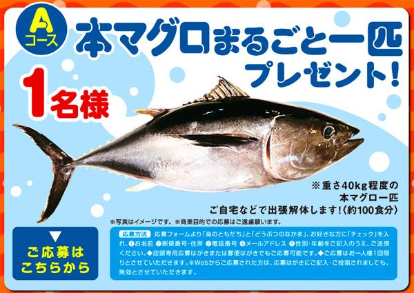 森永製菓『おっとっと』が本マグロまるごと一匹プレゼント!