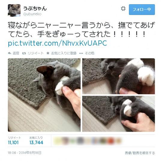 うぶちゃん(Twitter:@ubuneko)より