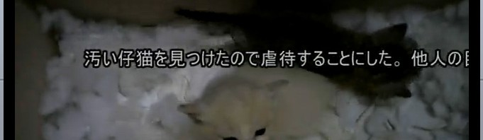 汚い仔猫を見つけたので虐待することにした(1匹目)