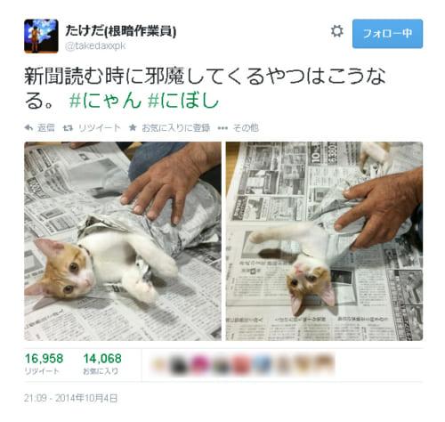 おじいちゃんの視線を取り戻せ!新聞に乗っかってアピールする仔猫がぐぅかわいい