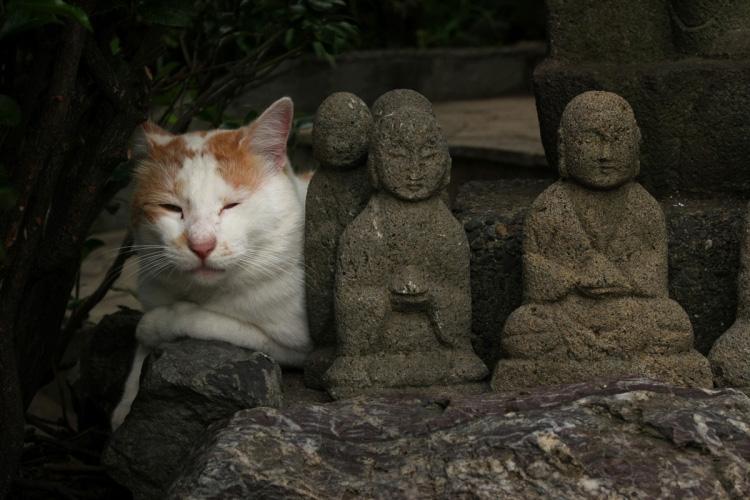 写真愛好家向け投稿サイト『ピクタバン』、「猫の居る風景」コンテストを開催