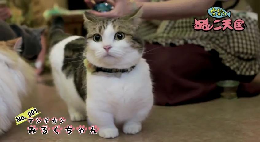 猫成分欠乏症でお困りの方に朗報!22匹の猫動画『突撃!ぬこ天国』公開