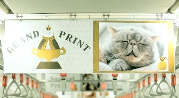 グランプリの猫