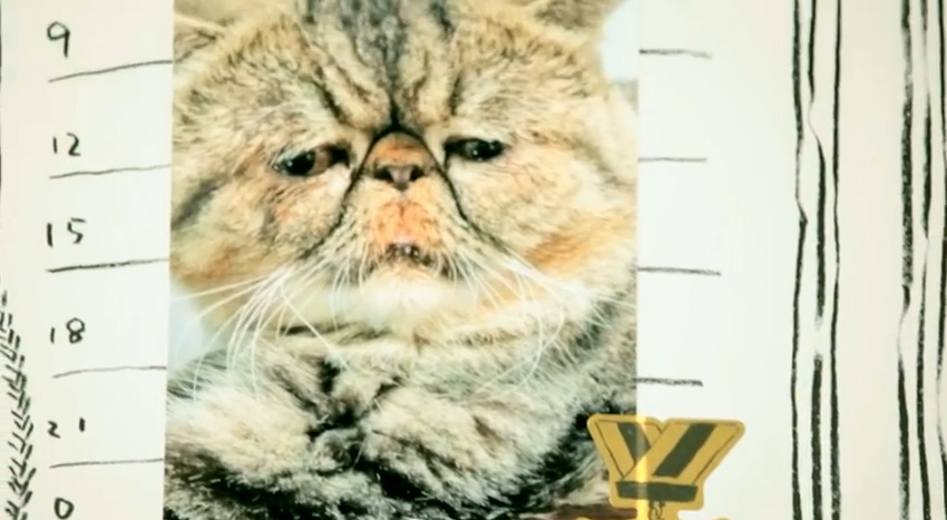 JR山手線『ブサかわ猫電車』愛猫家に惜しまれつつ運行終了