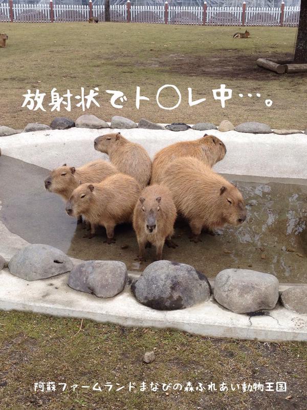 『阿蘇ファームランド ふれあい動物王国』のTwitterより