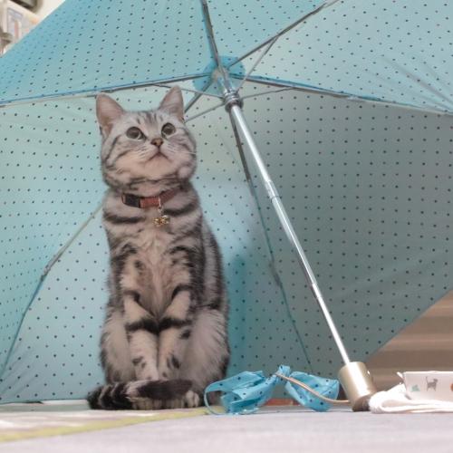2位:Small-fieldさんの『雨宿り?』