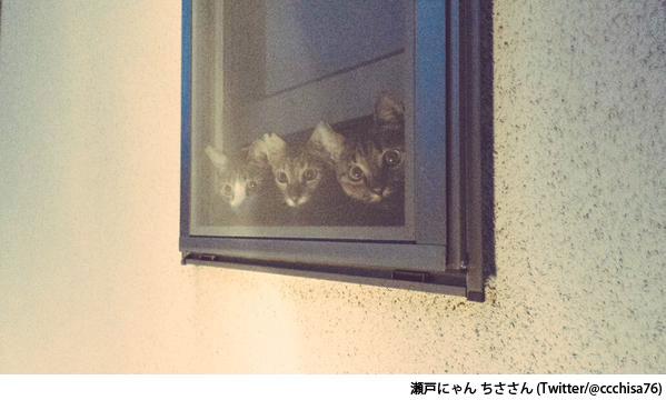 瀬戸にゃん-ちさ(@ccchisa76)さん