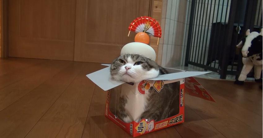 世界一有名な猫のまるが『鏡猫』姿を披露!箱に入ってご満悦にゃん