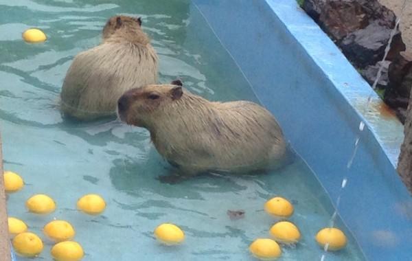 鹿児島市 平川動物公園(鹿児島県)