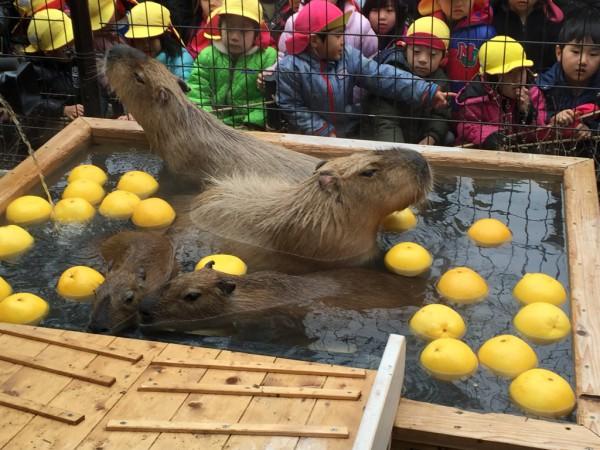 須坂市動物園(長野県)