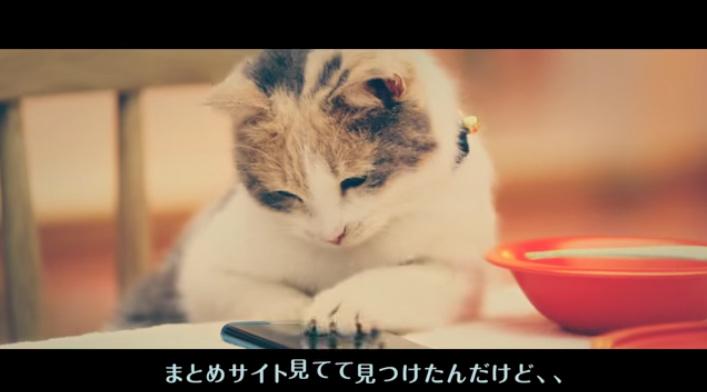 にゃんと!阿澄佳奈ら人気声優CVの猫の『ヒューにゃんドラマ』が「狂気じみてる(褒め言葉)」と話題に