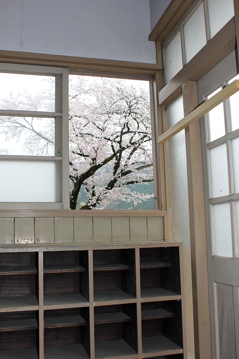 下駄箱から見た桜