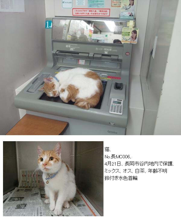 【続報有り】銀行ATMのお昼寝猫 動物愛護センターに保護されていた