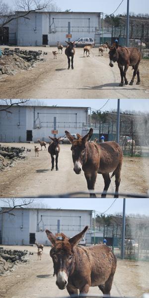 「那須サファリパーク恐ろしいw」「草食動物の本気見た」と言われてたので本当かどうか行ってみた……ら?貴重な経験ができた