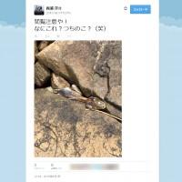 【閲覧注意】ツチノコついに発見か?謎の生物の死骸が海岸で撮…