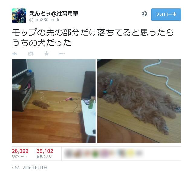 生後三か月の愛犬が家の中から忽然と消える→発見時の姿に皆がほっこり