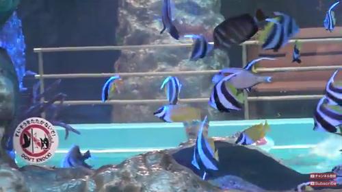 まるで海の中にいるみたいやぁ…日本初の流れるアクアリウムプールは必見!カリスマ6歳児がっちゃんと東北のハワイがタイアップ