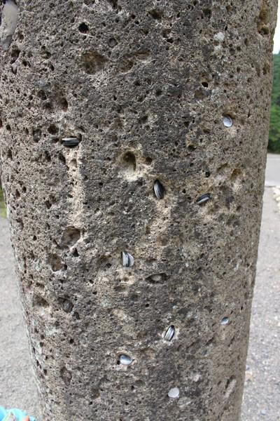 斎場の鳥居の柱2
