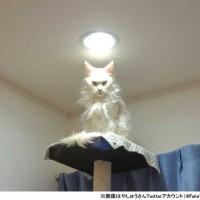 黙れ小僧! 『もののけ姫』モロの君そっくりの猫さ…