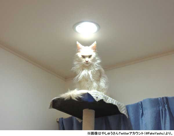 『もののけ姫』モロの君そっくりの猫さんが話題