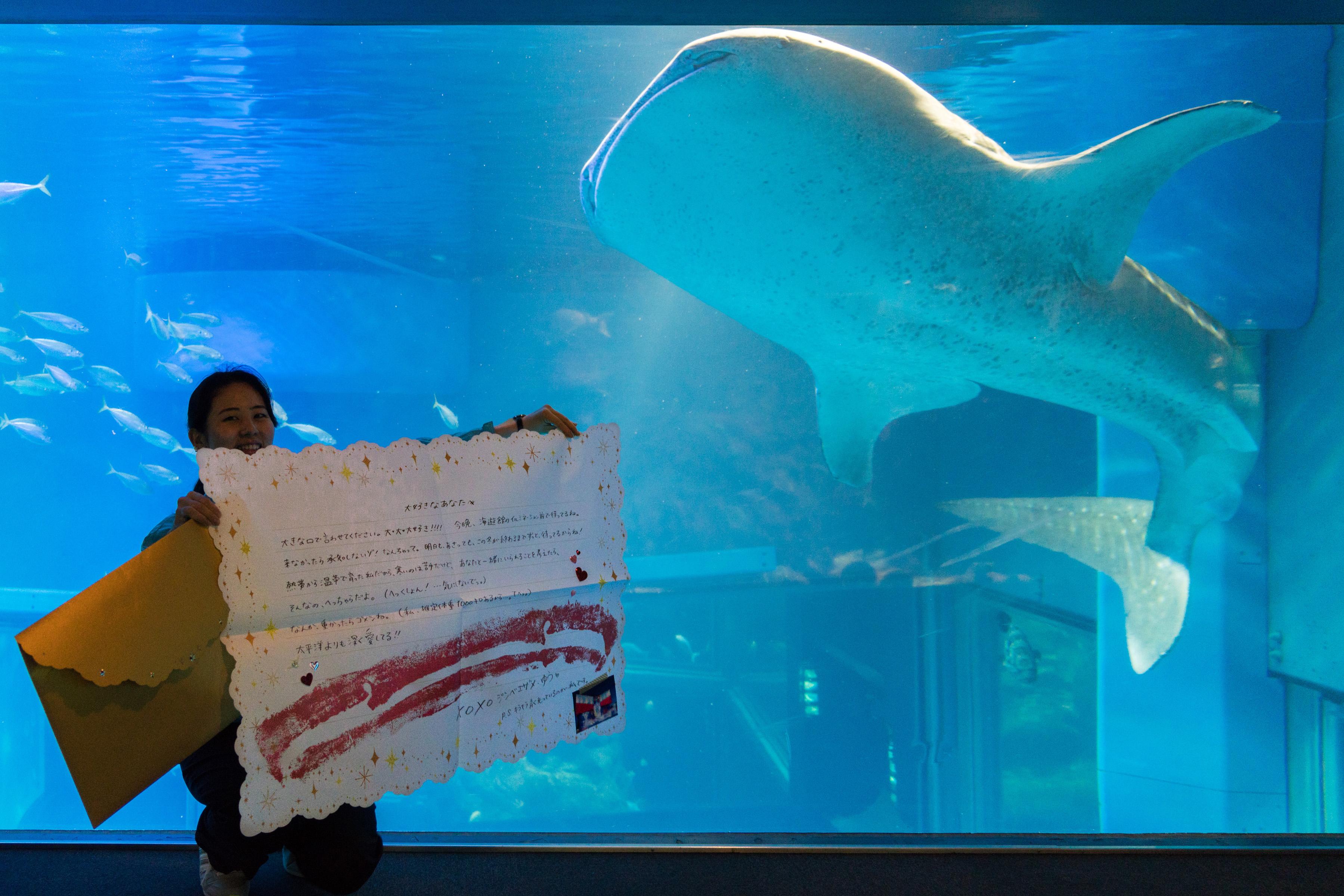 ジンベエザメやアザラシの濃厚ラブレター 大阪・海遊館がプレゼント