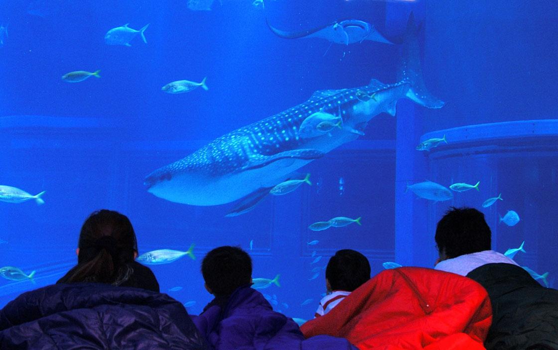 夜の水族館にお泊り!大阪・海遊館が参加グループ募集開始