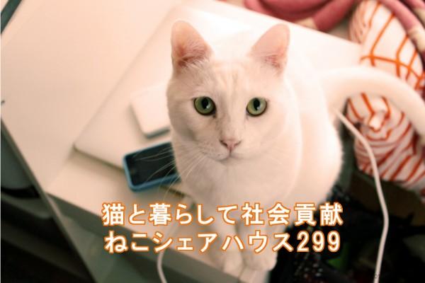 ねこシェアハウス299 保護猫しろまめ