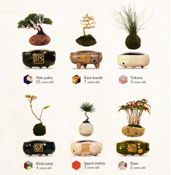 植物含む盆栽のセットは全て売り切れになっています。